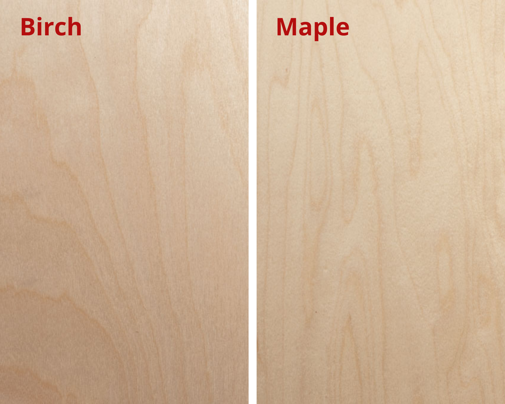 birch and maple